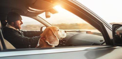 Driving with dog in car law